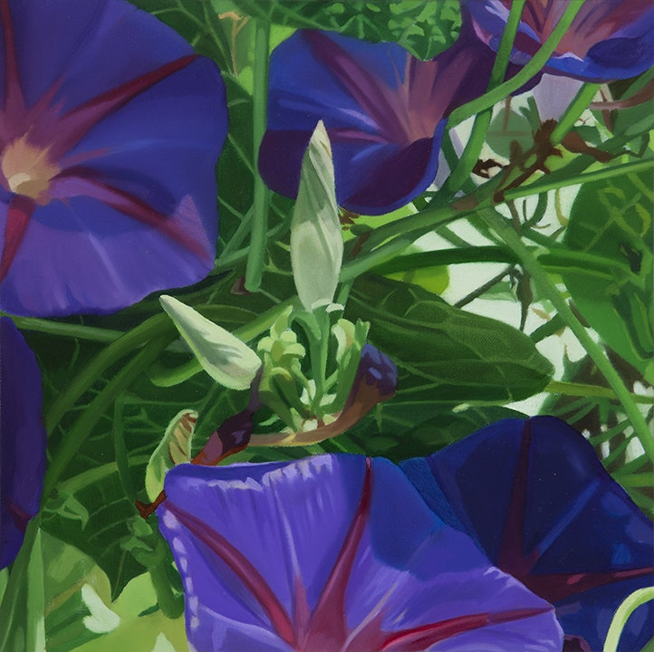 Morning Glories I