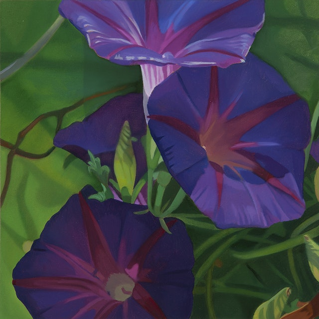 Morning Glories II