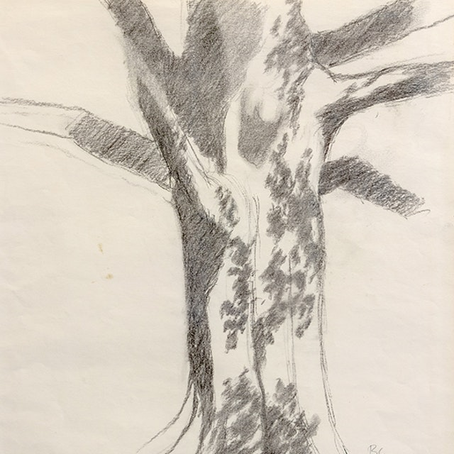 Untitled (Tree)