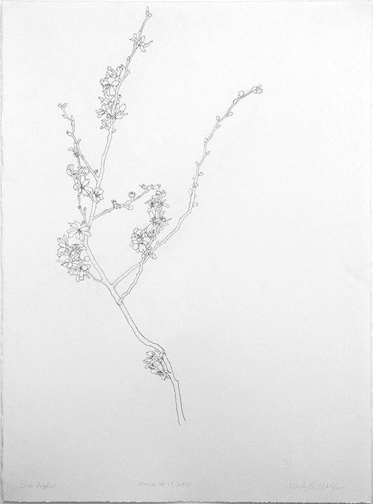 03-16-2010 Flowering Branch