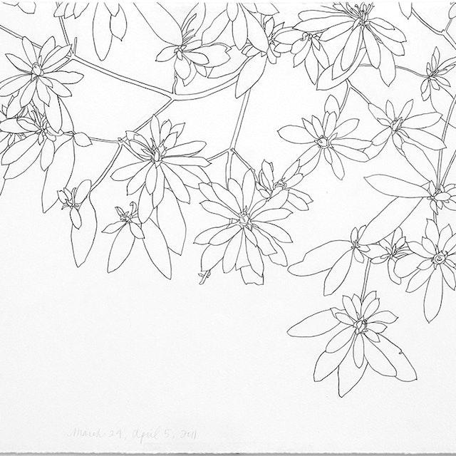 03-24-2011 Azaleas Progression - 1