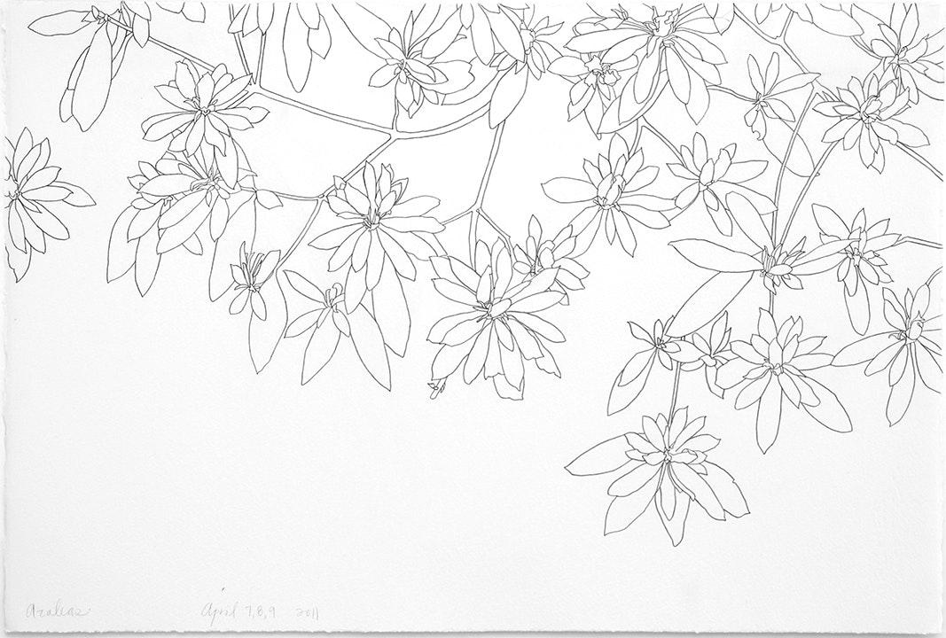 04-07-2011 Azalea Progression - 2