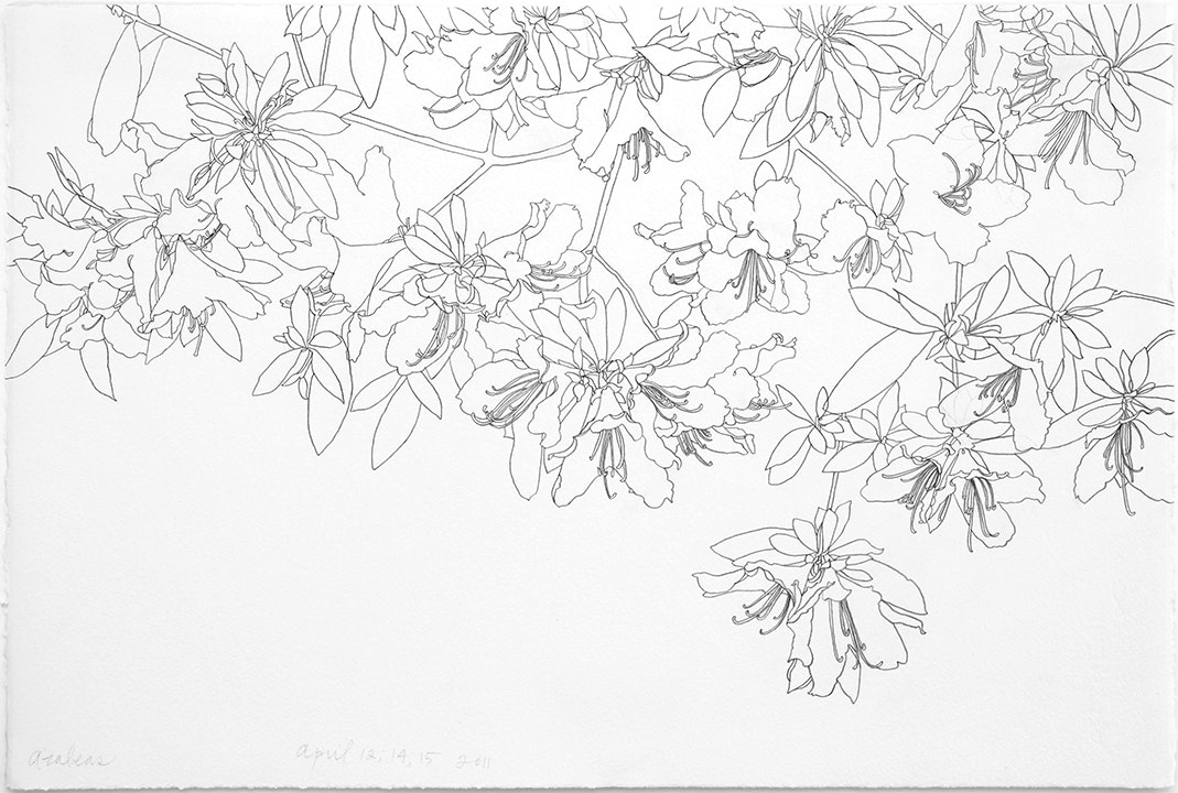 04-12-2011 Azaleas Progression - 3