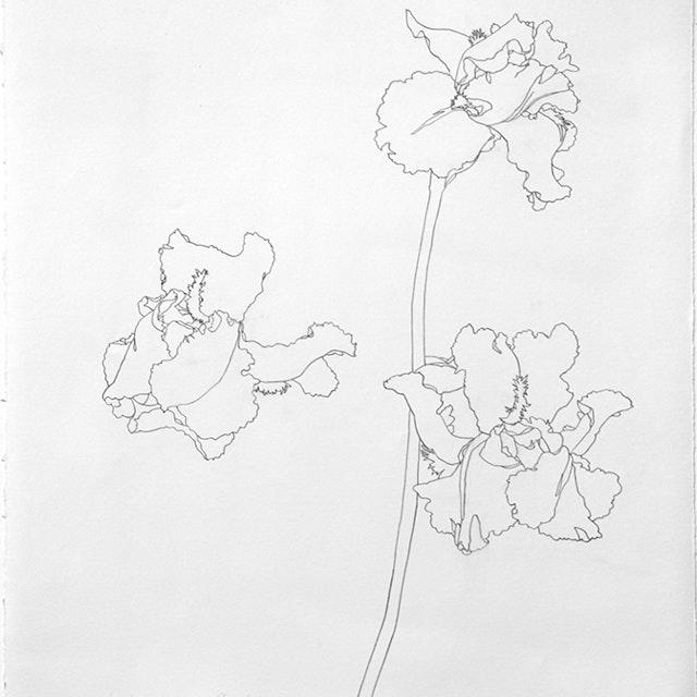 04-19-2015 Mama's Irises