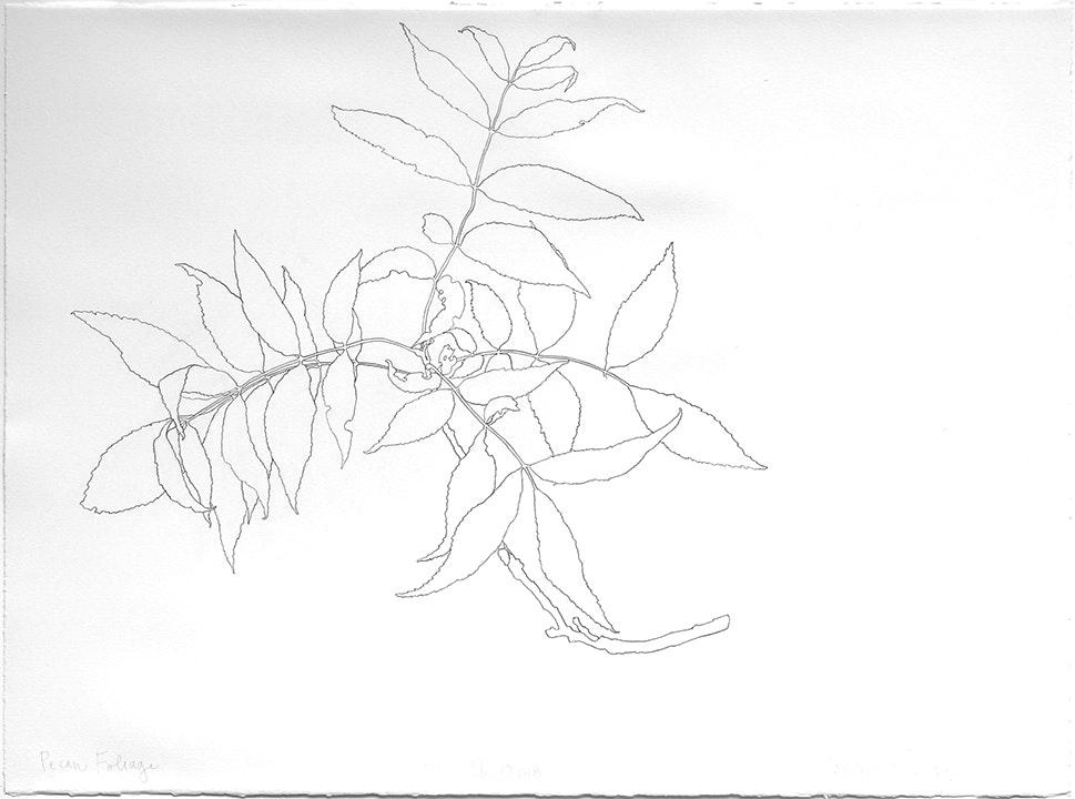 05-26-2018 Pecan Foliage