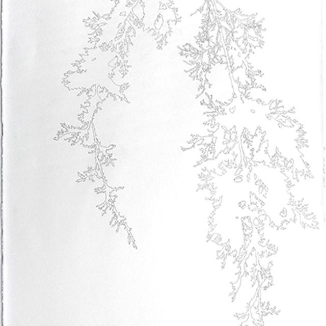 12-15-2014 Cedar Branch