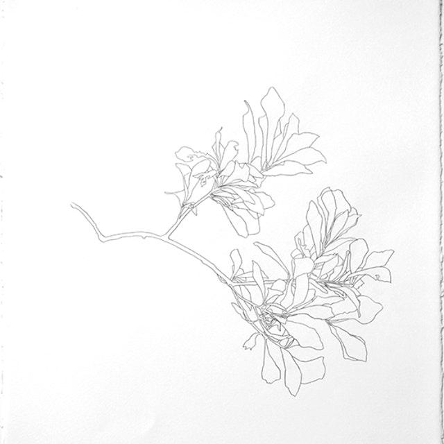 2005 Oak Branch - 1