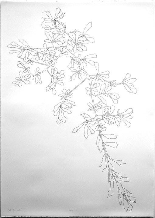 2005 Oak Branch - 3