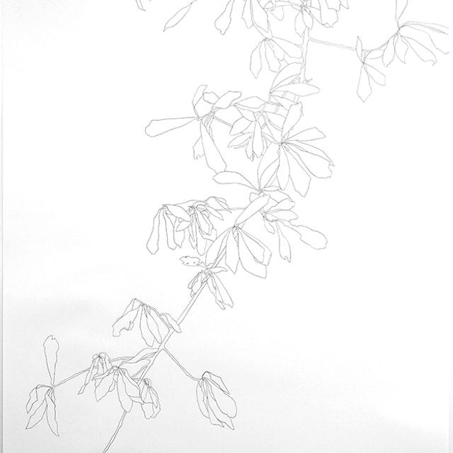 2005 Oak Branch - 6