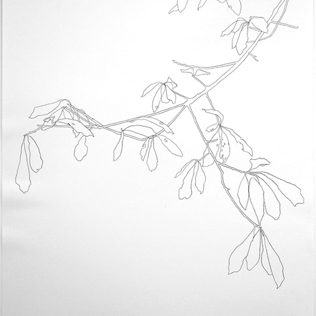 2005 Oak Branch - 8