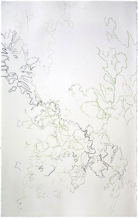 Shadows - Ann Abadie's Garden I