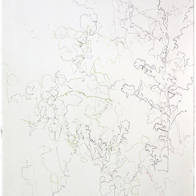 Shadows - Ann Abadie's Garden II