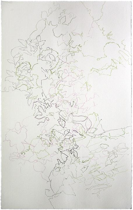 Shadows - Ann Abadie's Garden III