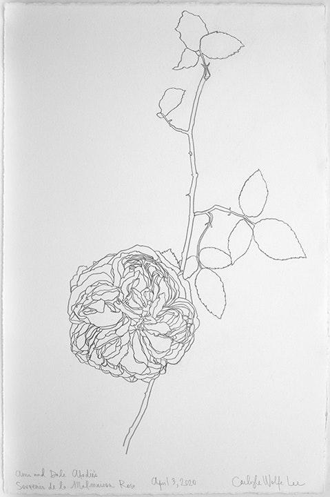 04-03-2020 Ann and Dale Abadie's Souvenir de la Malmaison Rose 10