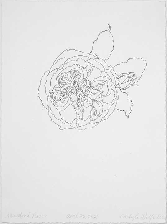 04 26 2021 Munstead Rose