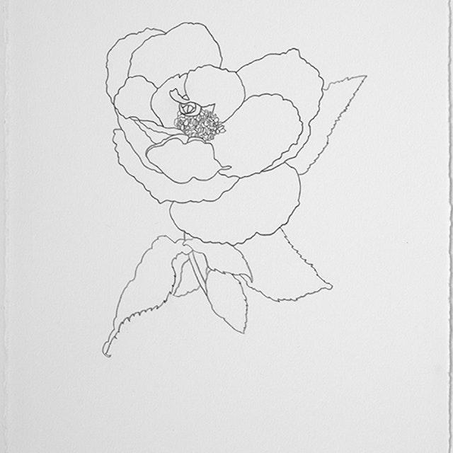 04-26-21 Souvenie de St. Anne Rose