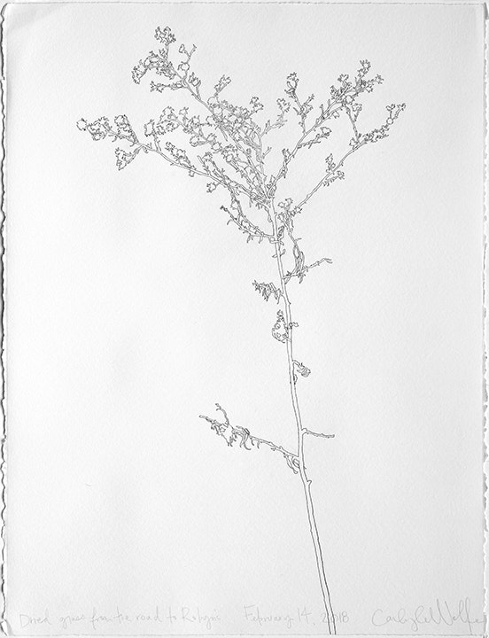 Dried Grass from the Road to Robyn's February 14, 2018