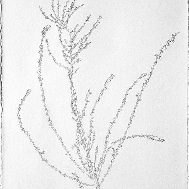 Dried Grass from the Road to Robyn's February 7-8, 2018