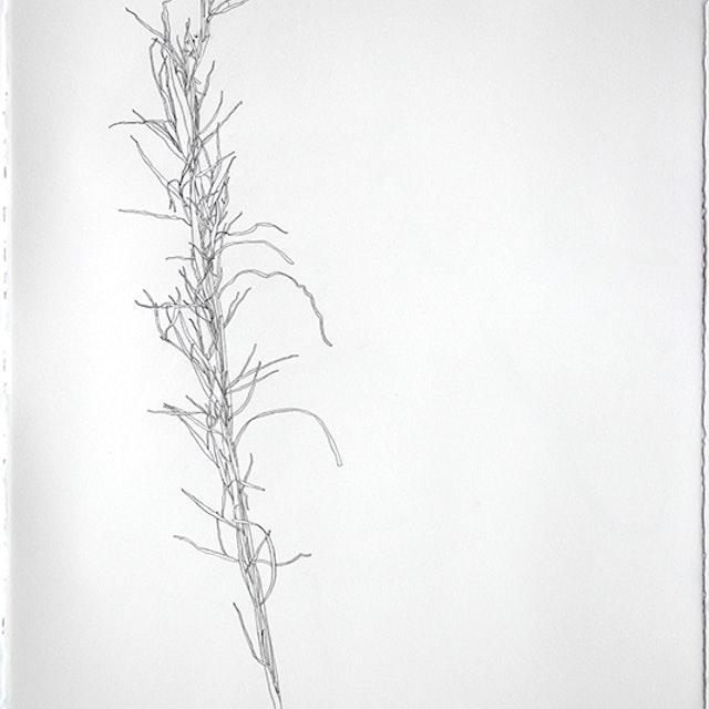 Sage Grass from Birdlands December 15, 2017