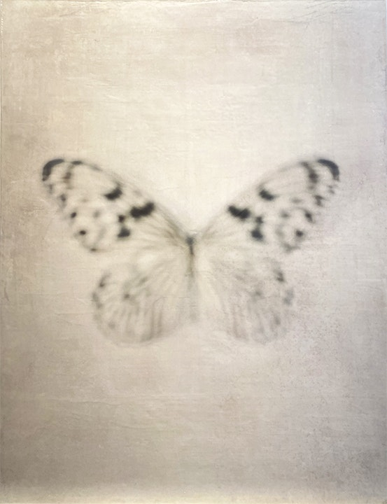 Black and White Butterly