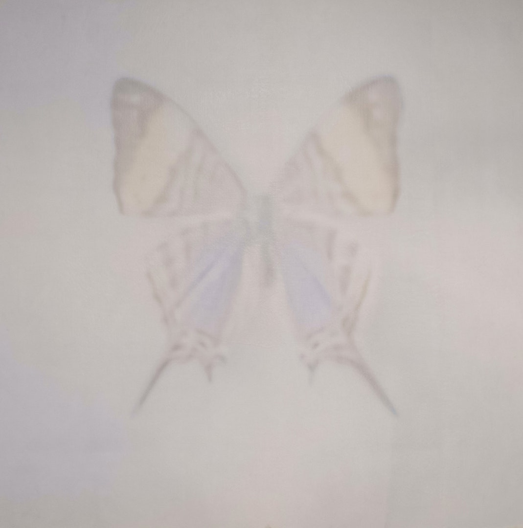 Butterfly With Pointed Wings