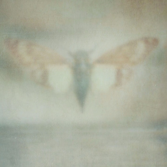 Moth In Flight