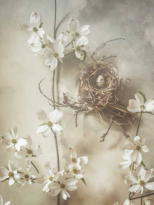 Dogwood and Nest 1