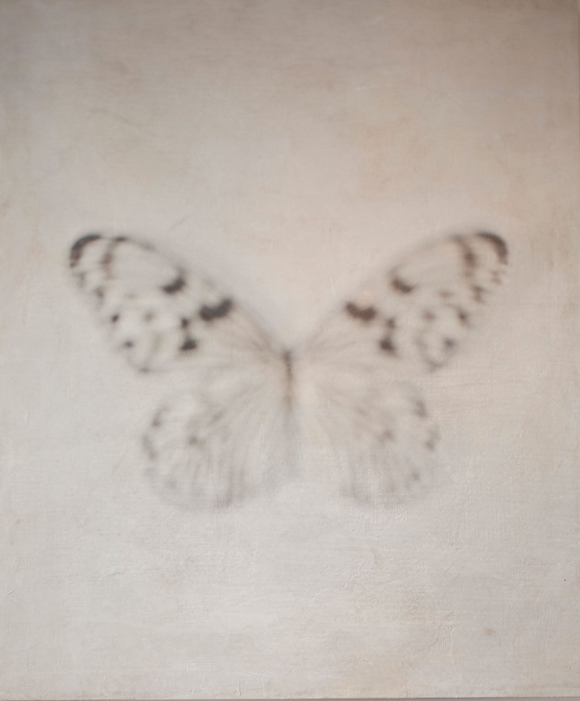 Untitled White w/black Butterfly