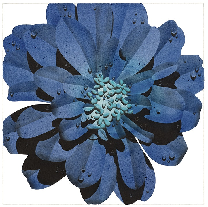 Prussian Blue Flower