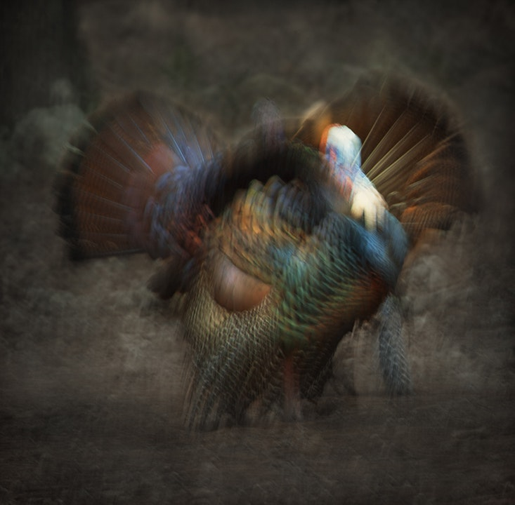 Abstract Turkey
