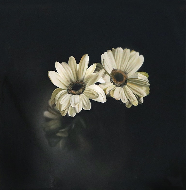Old Daisies