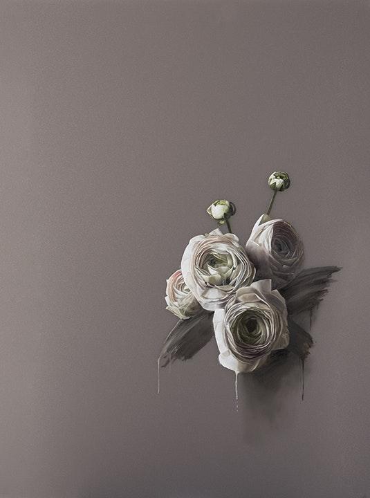 Pale Ranunculus