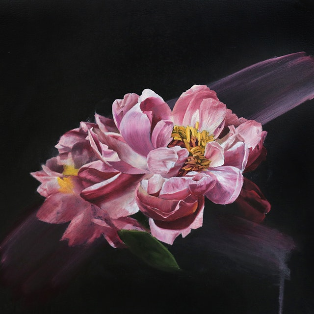 Untitled (Pink Camellia)