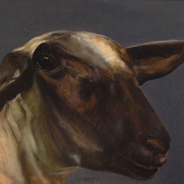 Jane The Ewe
