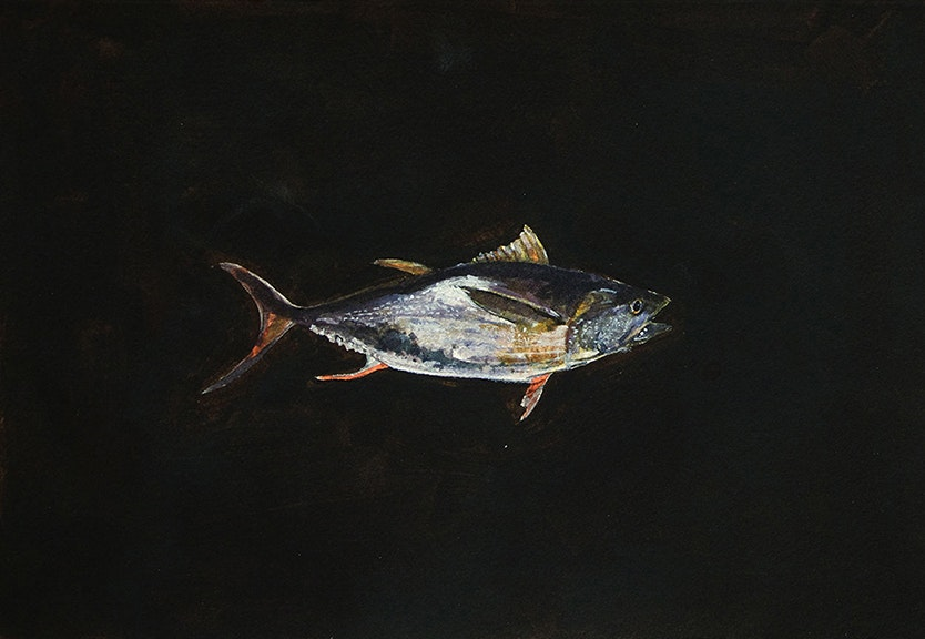 Untitled (Tuna)