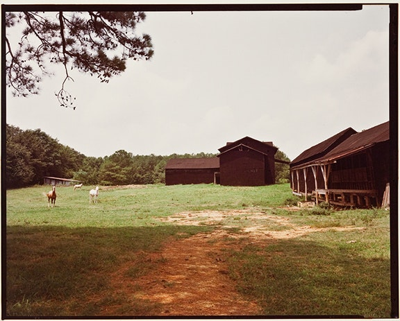 Untitled (Horses with Black Buildings, Newbern)