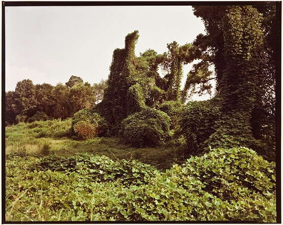 Untitled (Kudzu, Hale County)