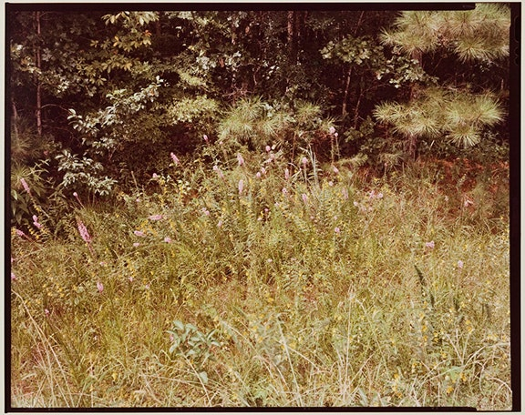 Untitled (Wildflowers)