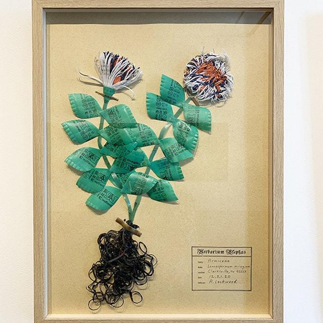 Leucospermum mirage