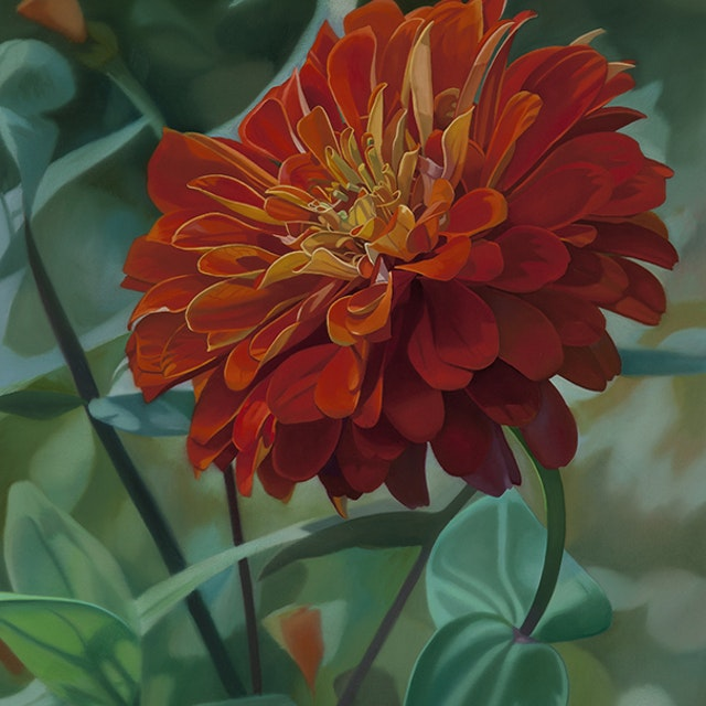 Orange Zinnia I