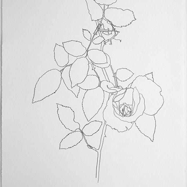 04-02-2020 Ann and Dale Abadie's Souvenir de la Malmaison Rose