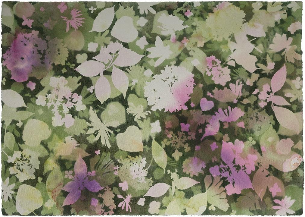 Mary Hartwell's Hydrangeas