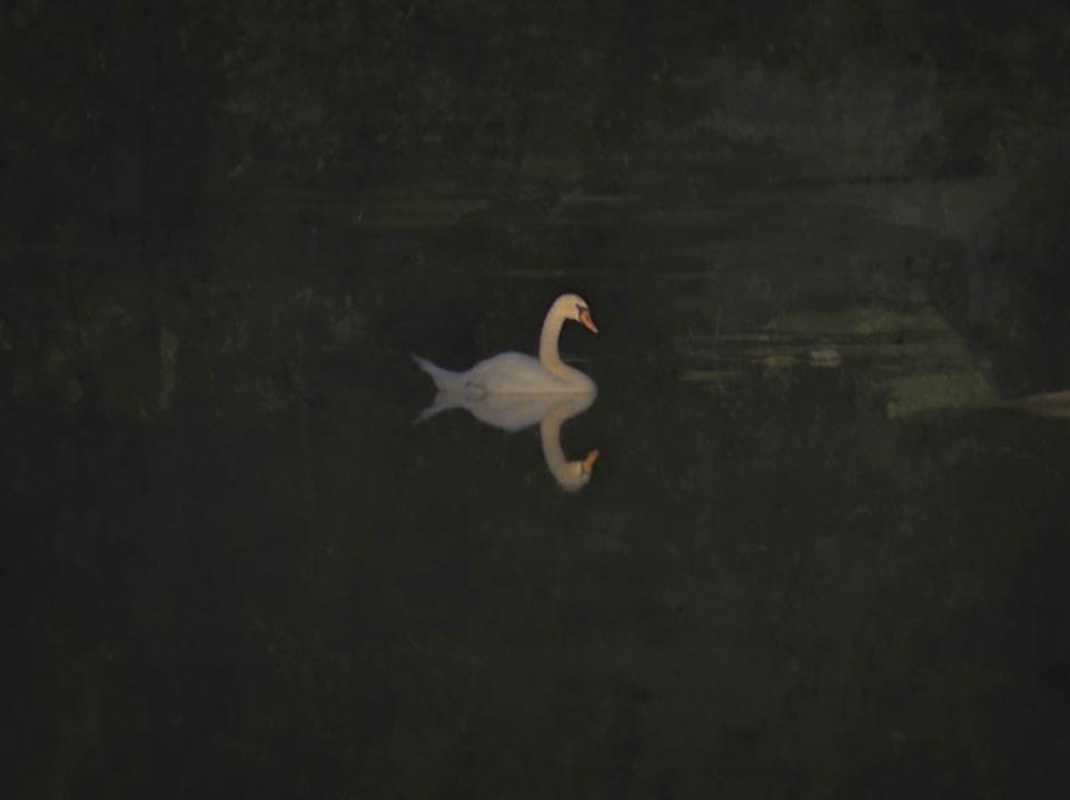 Lancaster Swan