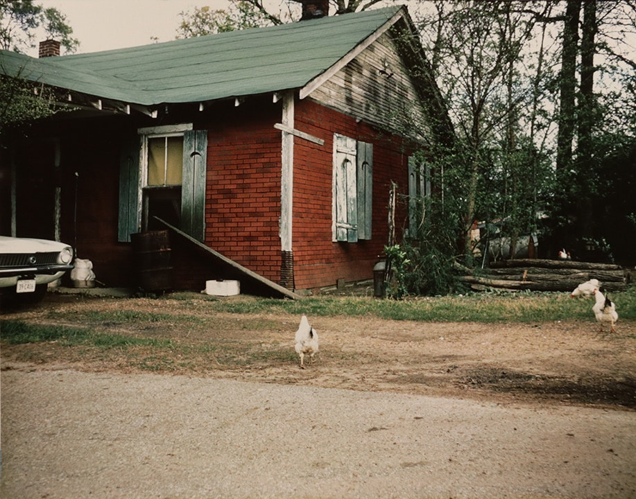 For Lucia, Series (chickens)