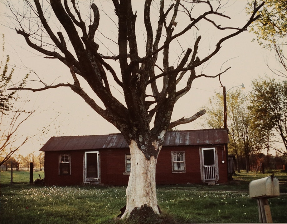 For Lucia, Series (tree and house)