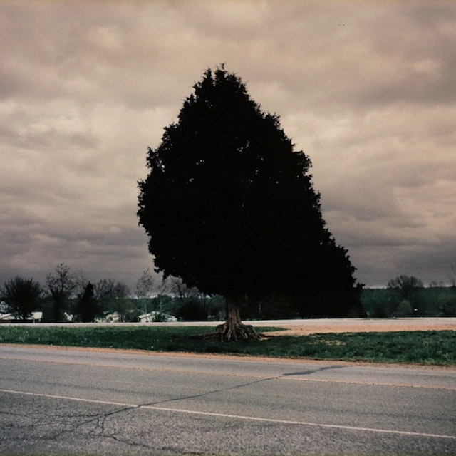 For Lucia, Series (tree and sky)